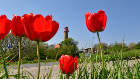 Frühling auf Rügen